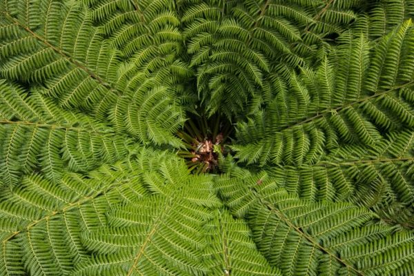 Consciously Living - Your NZ Wellness Directory - Ferns