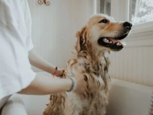 Consciously Living - Your NZ Wellness Directory - Eco Dog Wash