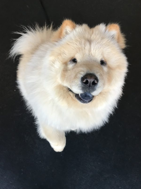Consciously Living - Your NZ Wellness Directory - Show Dog